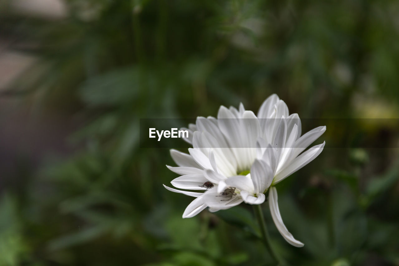 Close-up of white flower against blurred plants