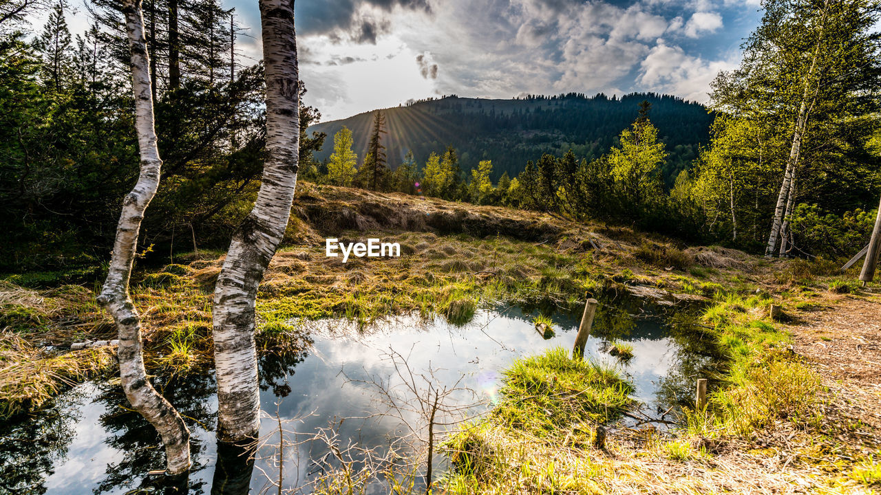 plant, tree, scenics - nature, beauty in nature, mountain, water, forest, tranquility, land, nature, no people, landscape, tranquil scene, cloud - sky, non-urban scene, day, environment, sky, outdoors, pine tree, pine woodland, coniferous tree, stream - flowing water, flowing water