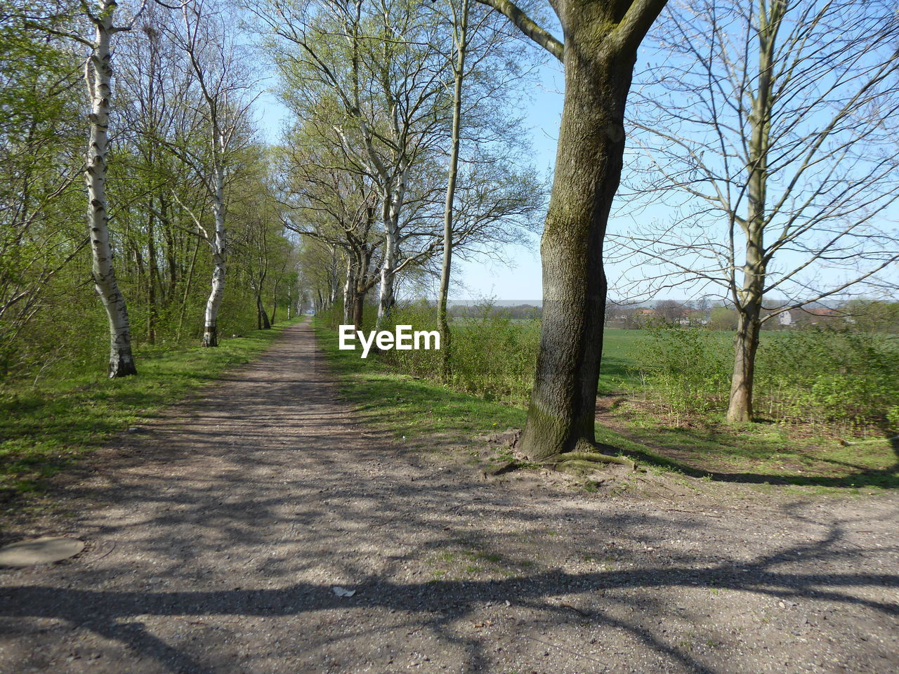 tree, plant, direction, the way forward, nature, tranquility, no people, trunk, tree trunk, land, tranquil scene, day, footpath, shadow, bare tree, growth, road, sunlight, park, scenics - nature, diminishing perspective, outdoors, woodland, treelined