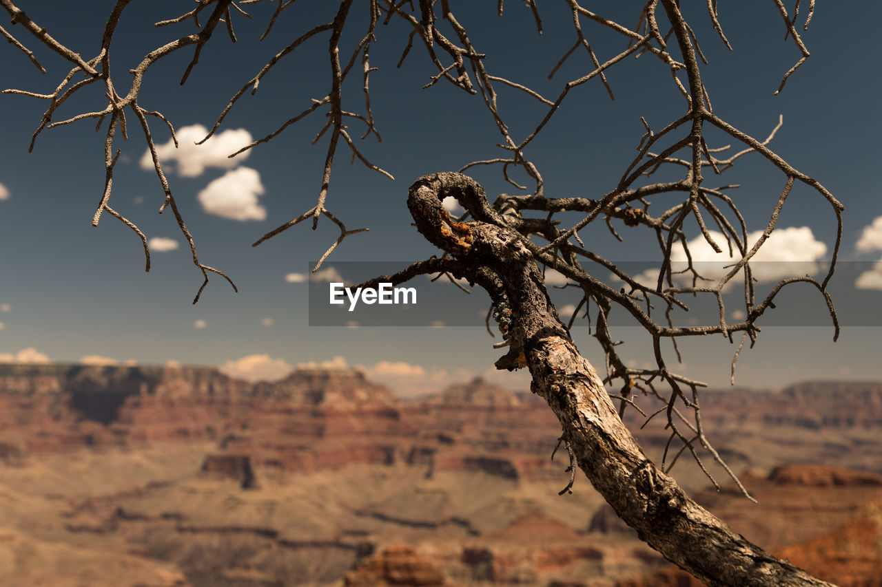 animals in the wild, nature, branch, dead plant, tree, outdoors, no people, day, focus on foreground, one animal, animal wildlife, beauty in nature, animal themes, arid climate, dried plant, bare tree, sunlight, bird, plant, perching, close-up, sky, dead tree, bird of prey