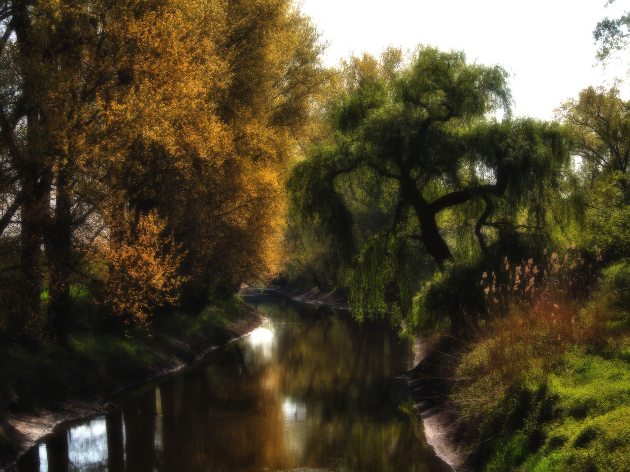 tree, nature, water, river, growth, no people, tranquility, outdoors, beauty in nature, scenics, day, sky