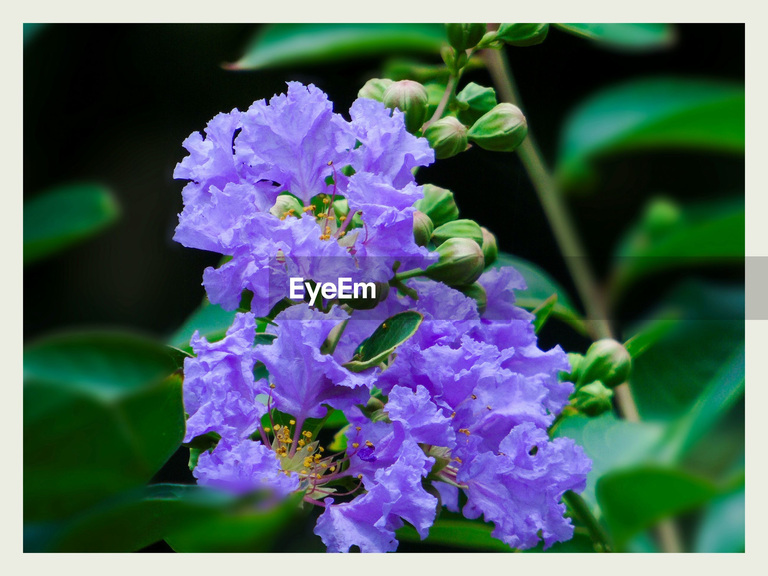 flowering plant, flower, plant, vulnerability, fragility, freshness, beauty in nature, transfer print, growth, auto post production filter, close-up, petal, purple, nature, flower head, inflorescence, selective focus, no people, day, focus on foreground, outdoors, lilac