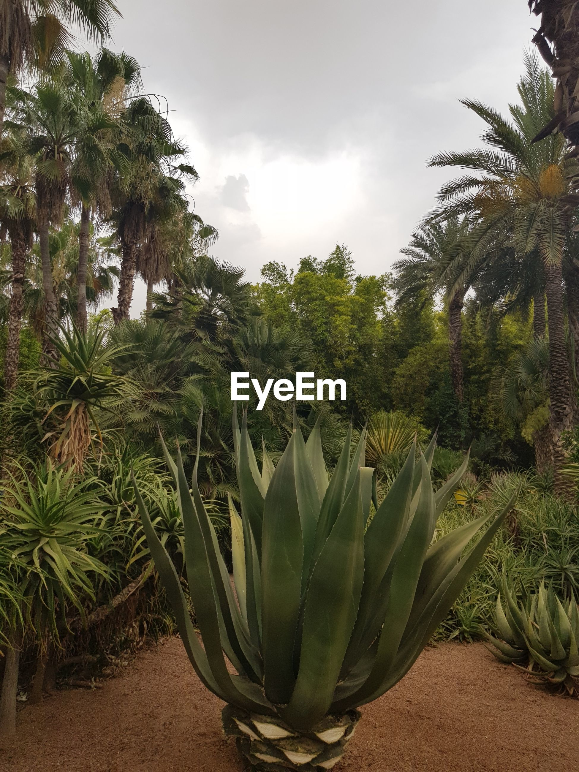CLOSE-UP OF PALM TREES AND PLANTS GROWING ON FIELD