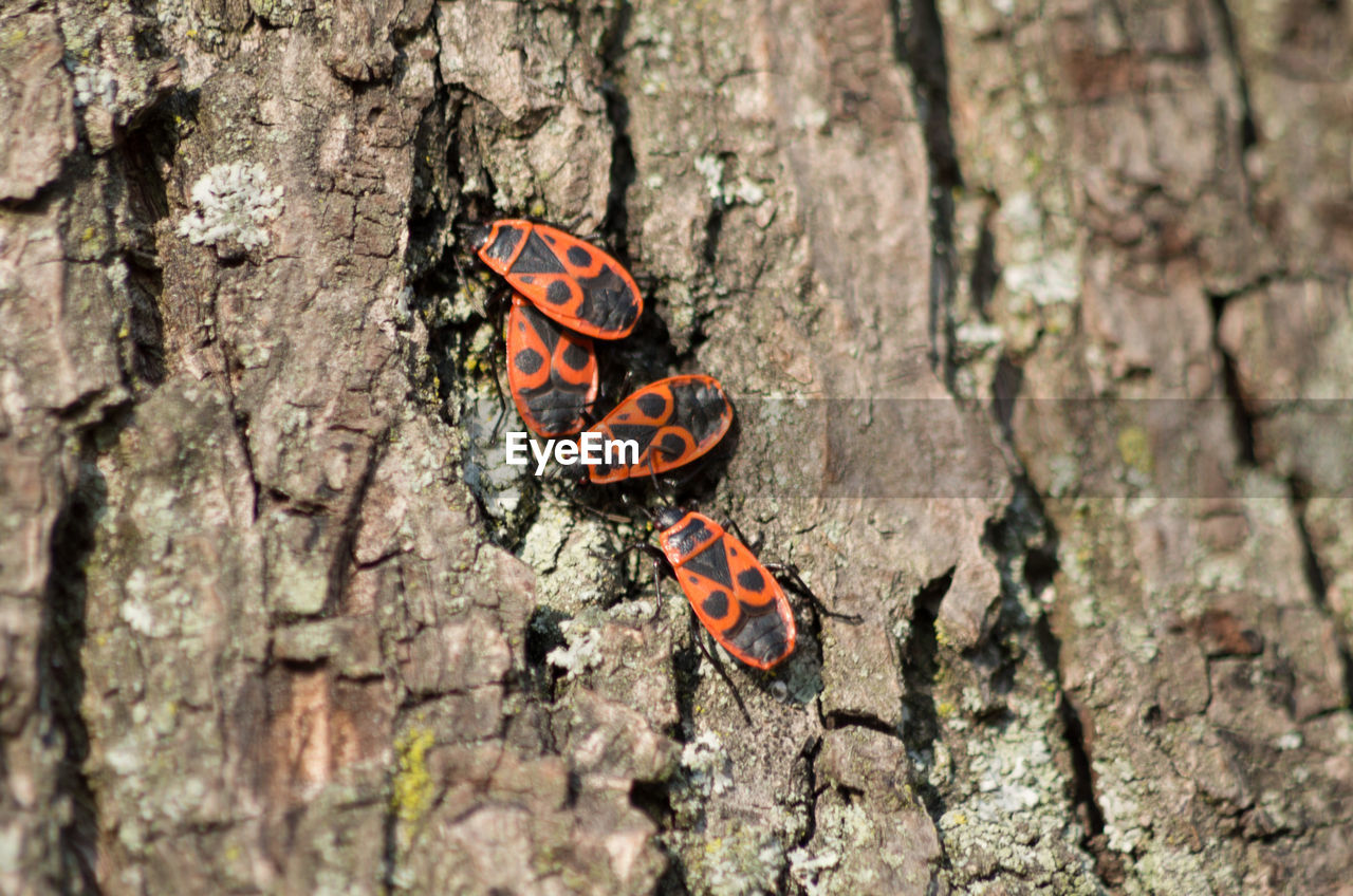 Close-up of bugs on tree trunk