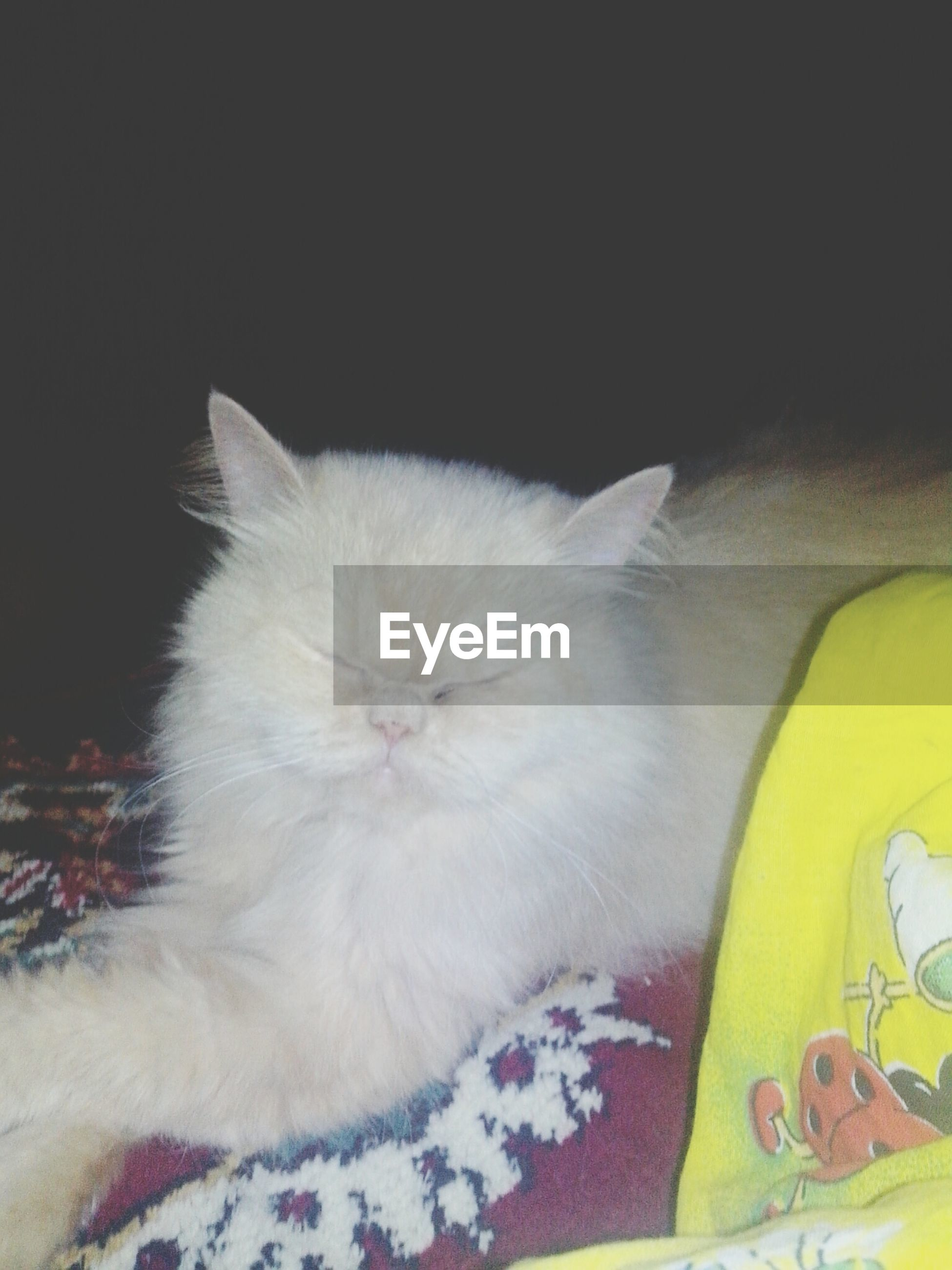 domestic animals, pets, indoors, animal themes, domestic cat, one animal, white color, cat, mammal, relaxation, sleeping, feline, close-up, high angle view, lying down, bed, resting, softness, no people, white