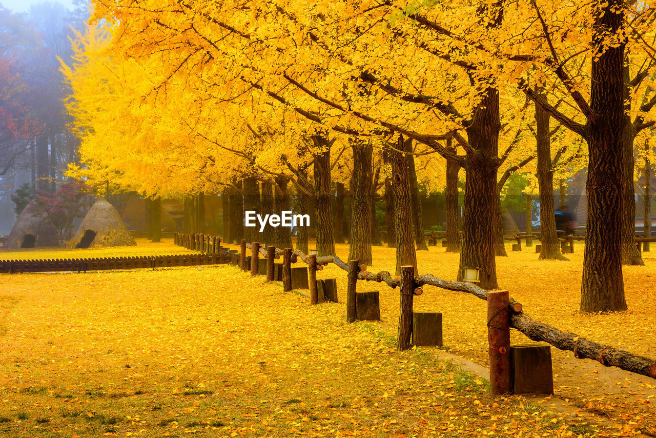 plant, tree, autumn, change, nature, beauty in nature, park, park - man made space, yellow, in a row, day, growth, outdoors, architecture, tree trunk, incidental people, orange color, treelined, footpath, tranquility, autumn collection