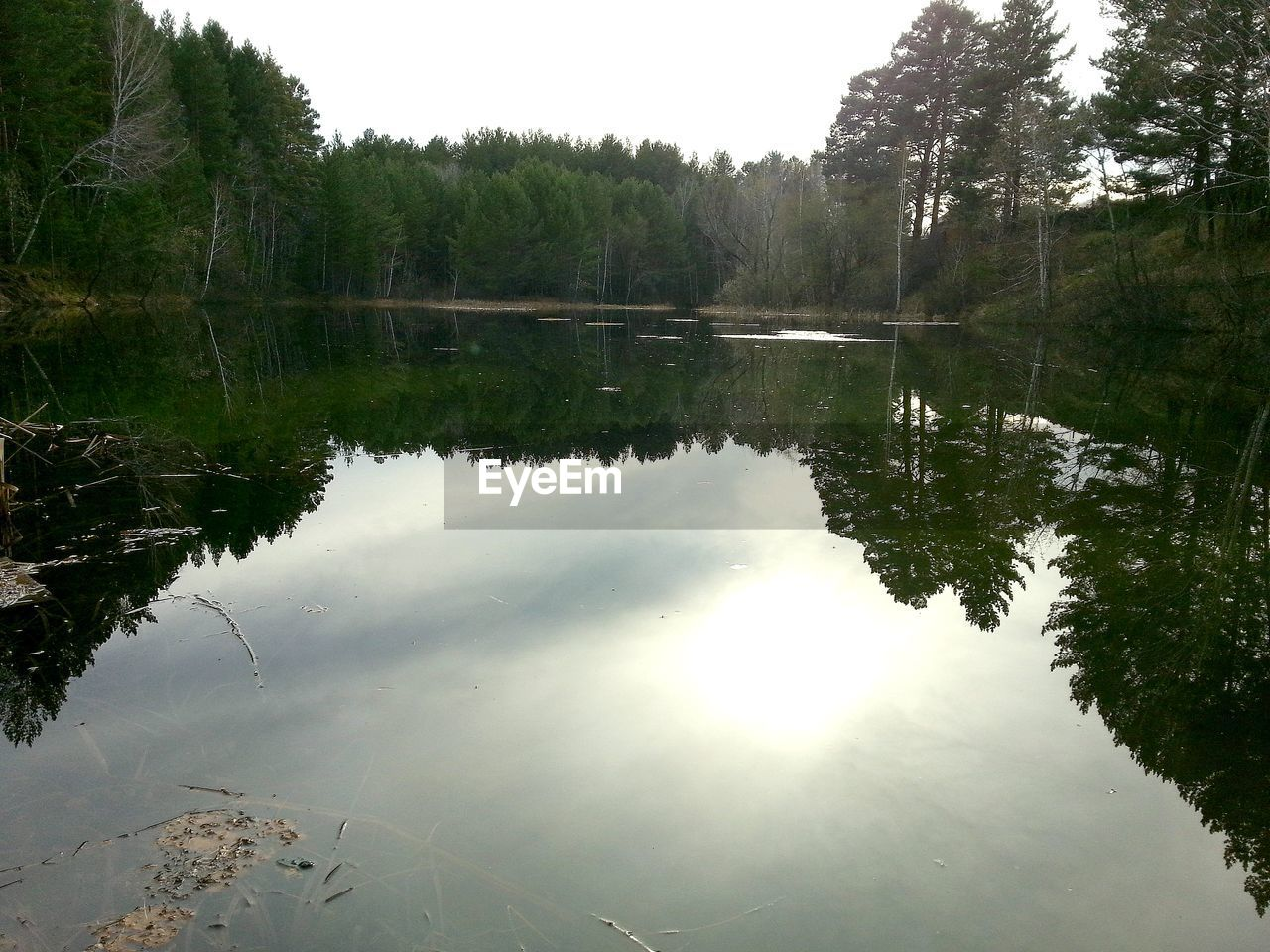 reflection, water, lake, tree, tranquility, plant, tranquil scene, scenics - nature, beauty in nature, sky, nature, no people, day, non-urban scene, waterfront, outdoors, forest, idyllic, growth, reflection lake