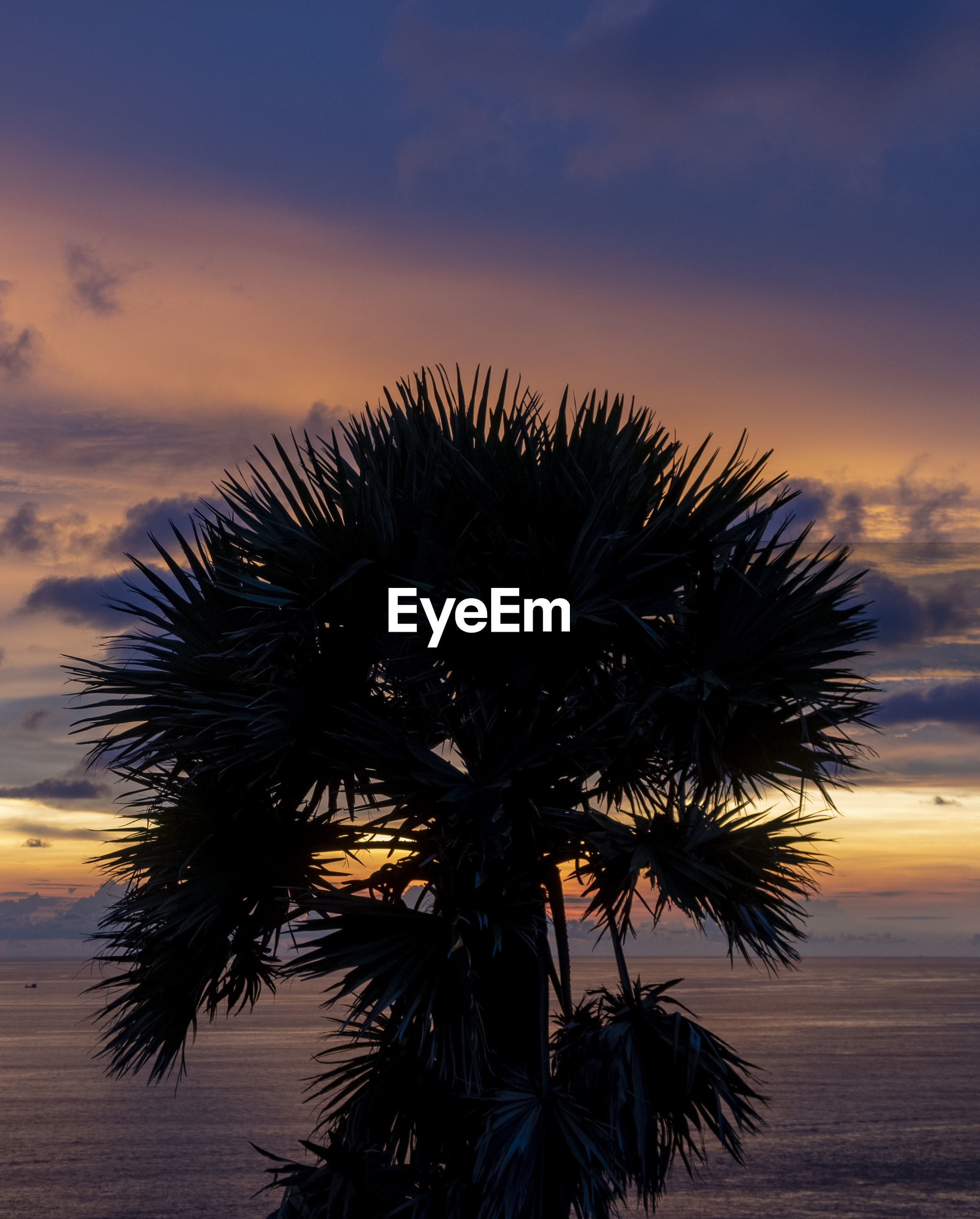 SILHOUETTE PALM TREE AGAINST SKY AT SUNSET