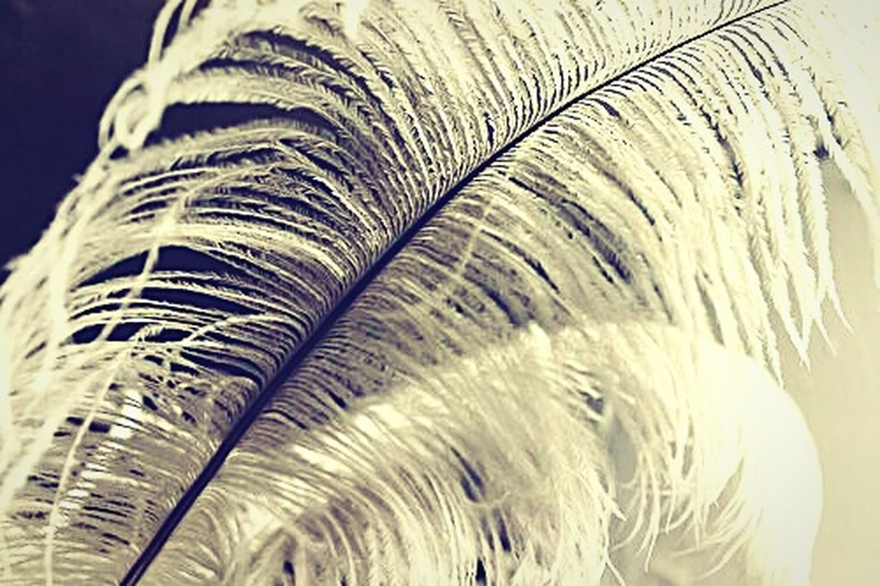 close-up, no people, feather, backgrounds, biology, nature, fragility, peacock feather, day