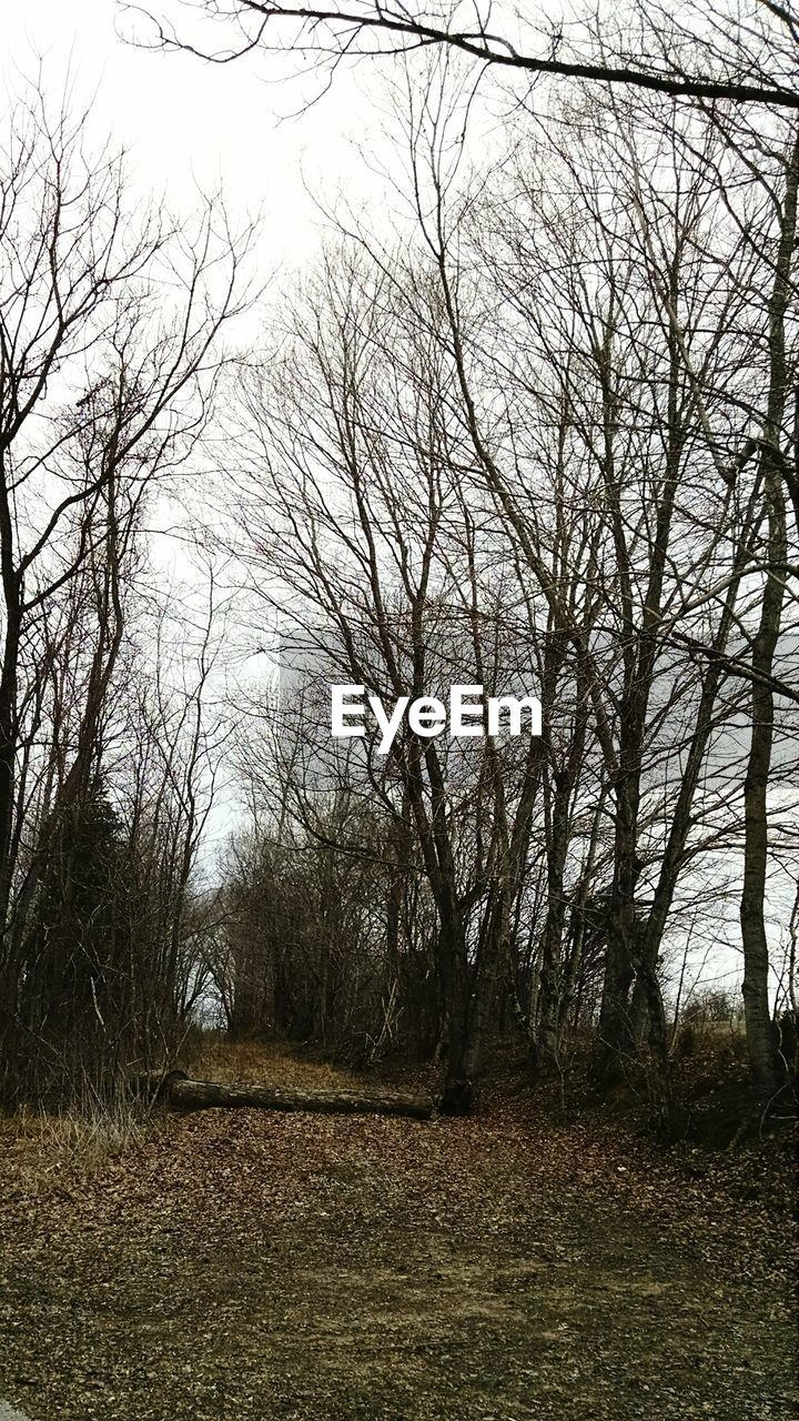 Bare Trees Along Path In Forest