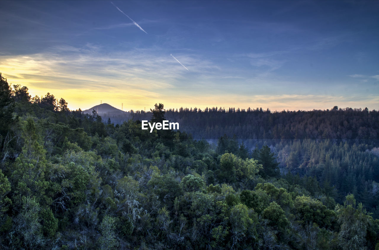 Scenic View Of Forest Against Sky At Sunset