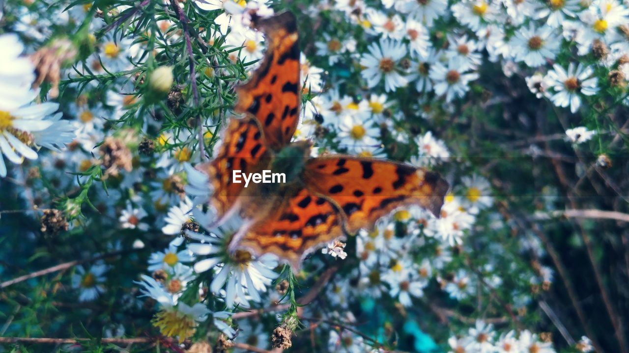 animal themes, animals in the wild, one animal, butterfly - insect, nature, insect, day, growth, outdoors, plant, butterfly, no people, beauty in nature, animal wildlife, fragility, tree, close-up, freshness, mammal