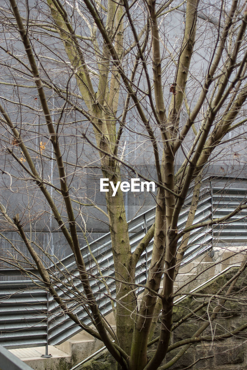 tree, branch, nature, bare tree, day, no people, outdoors, growth, beauty in nature, close-up, sky