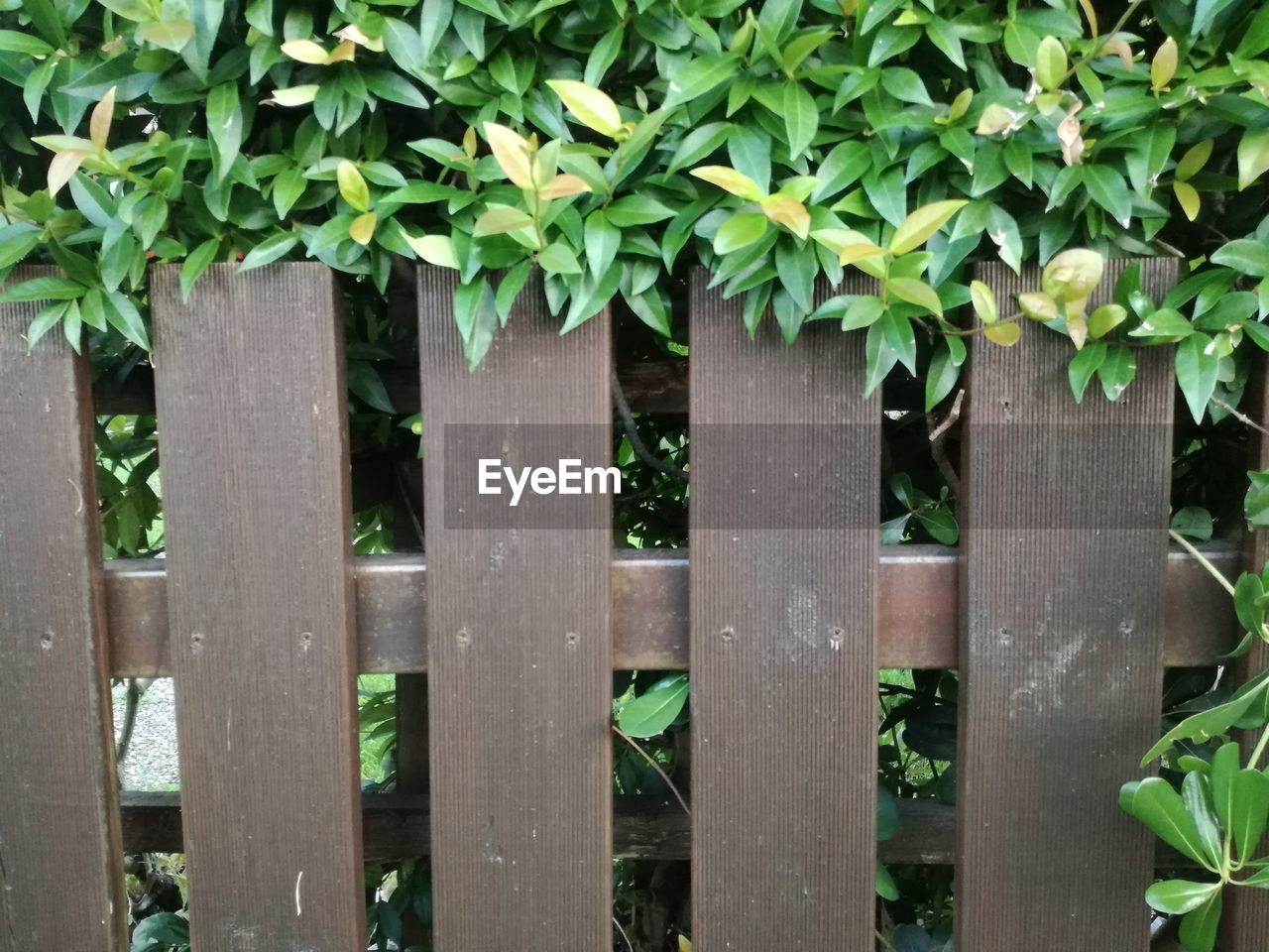 plant, plant part, leaf, barrier, boundary, fence, growth, green color, no people, nature, wood - material, day, close-up, outdoors, security, protection, safety, built structure, beauty in nature, ivy