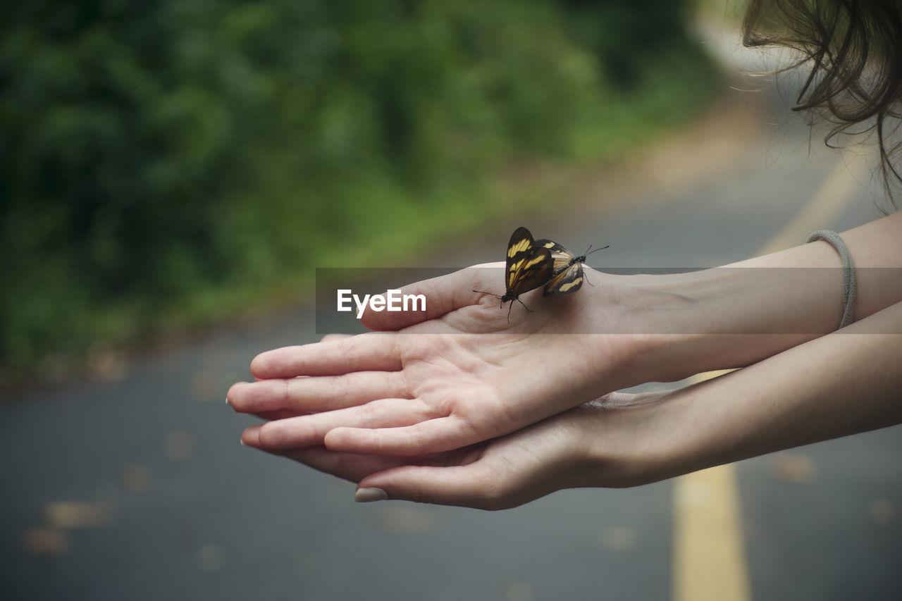 Close-Up Of Butterflieson Hand