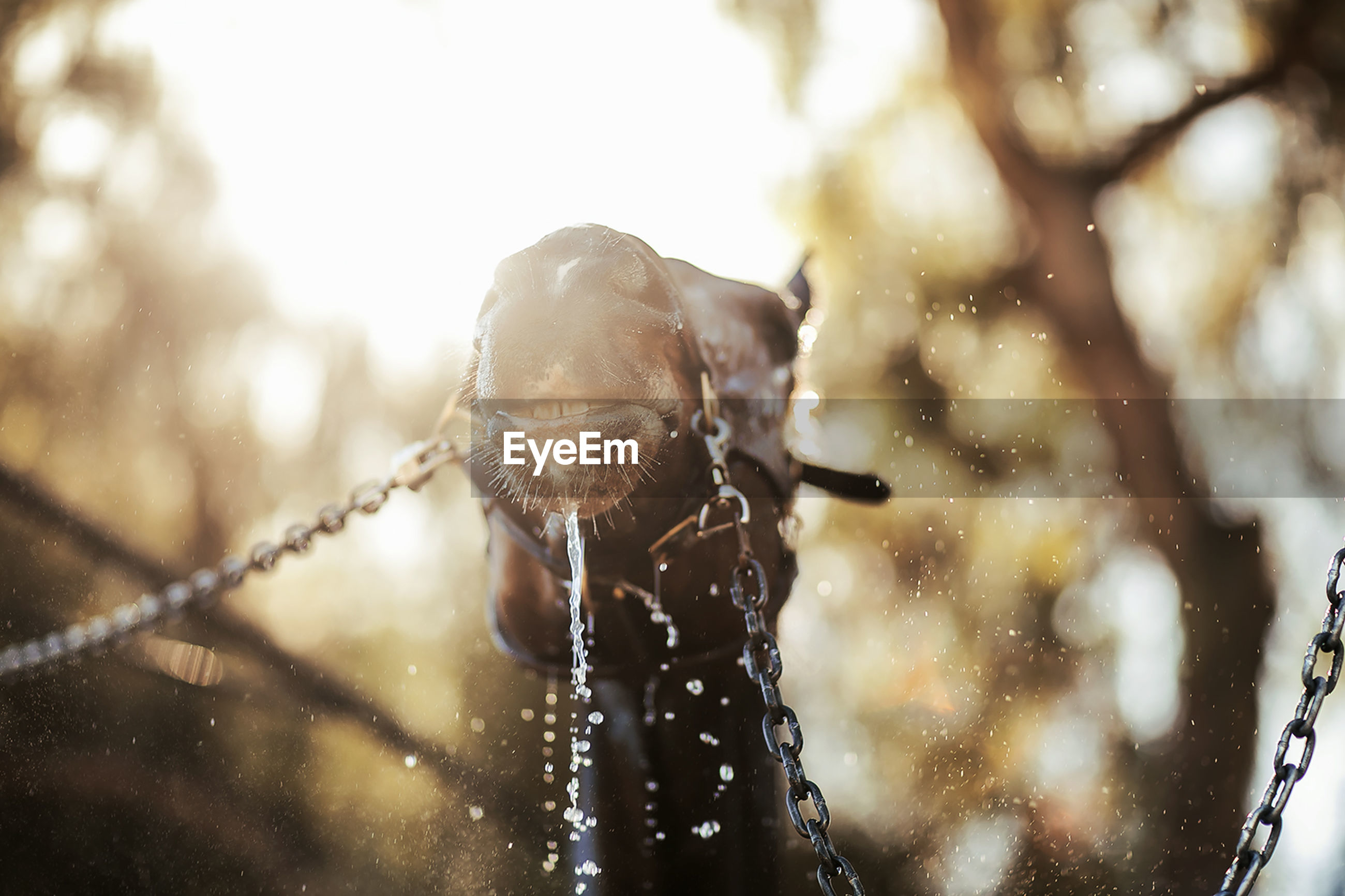 Low angle view of horse splashing water during sunset