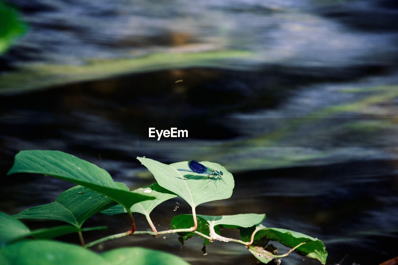 plant part, leaf, plant, growth, beauty in nature, green color, nature, water, day, no people, close-up, vulnerability, fragility, one animal, animals in the wild, focus on foreground, animal wildlife, flower, animal, outdoors, leaves