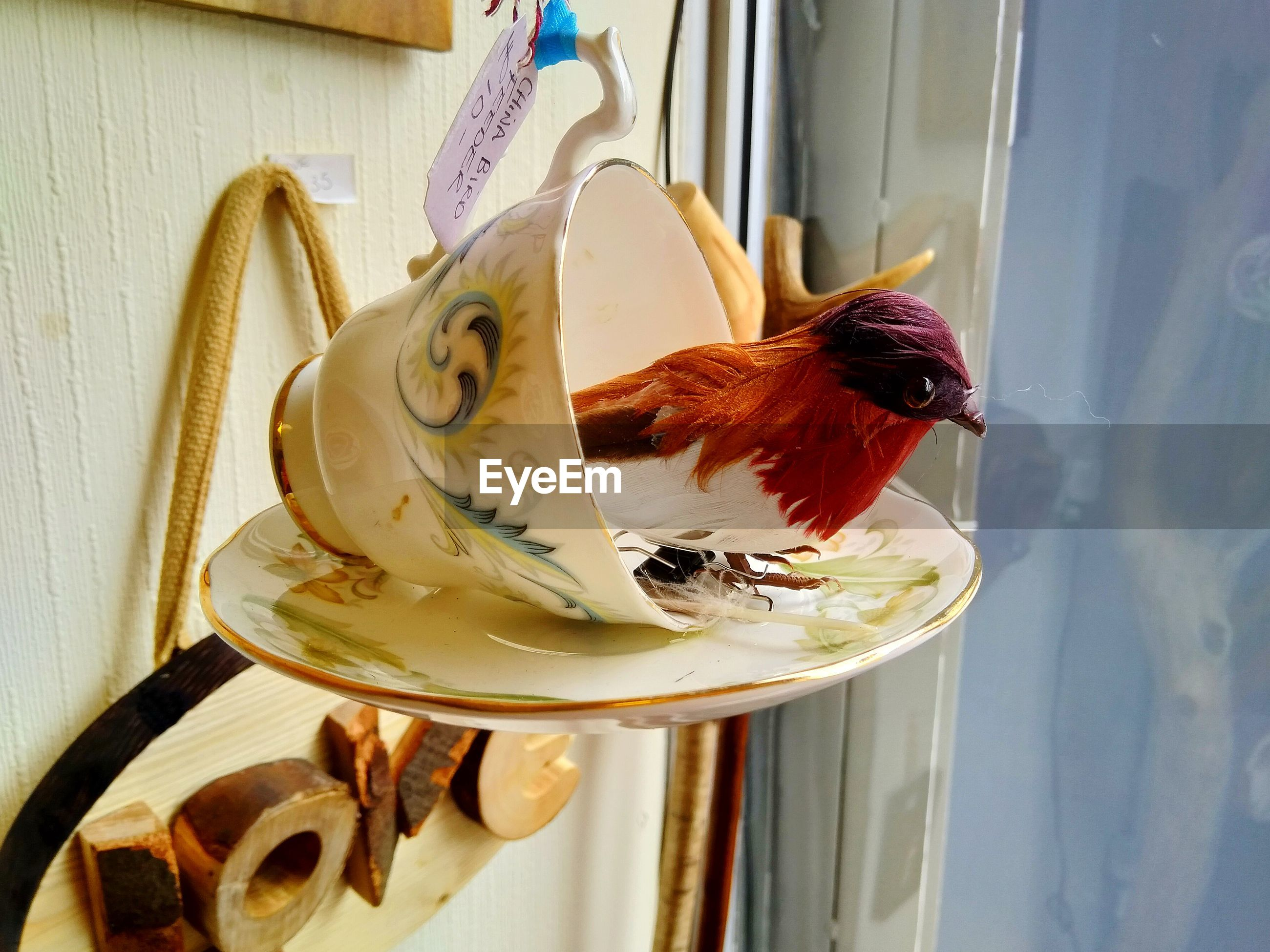 CLOSE-UP OF A BIRD IN A GLASS