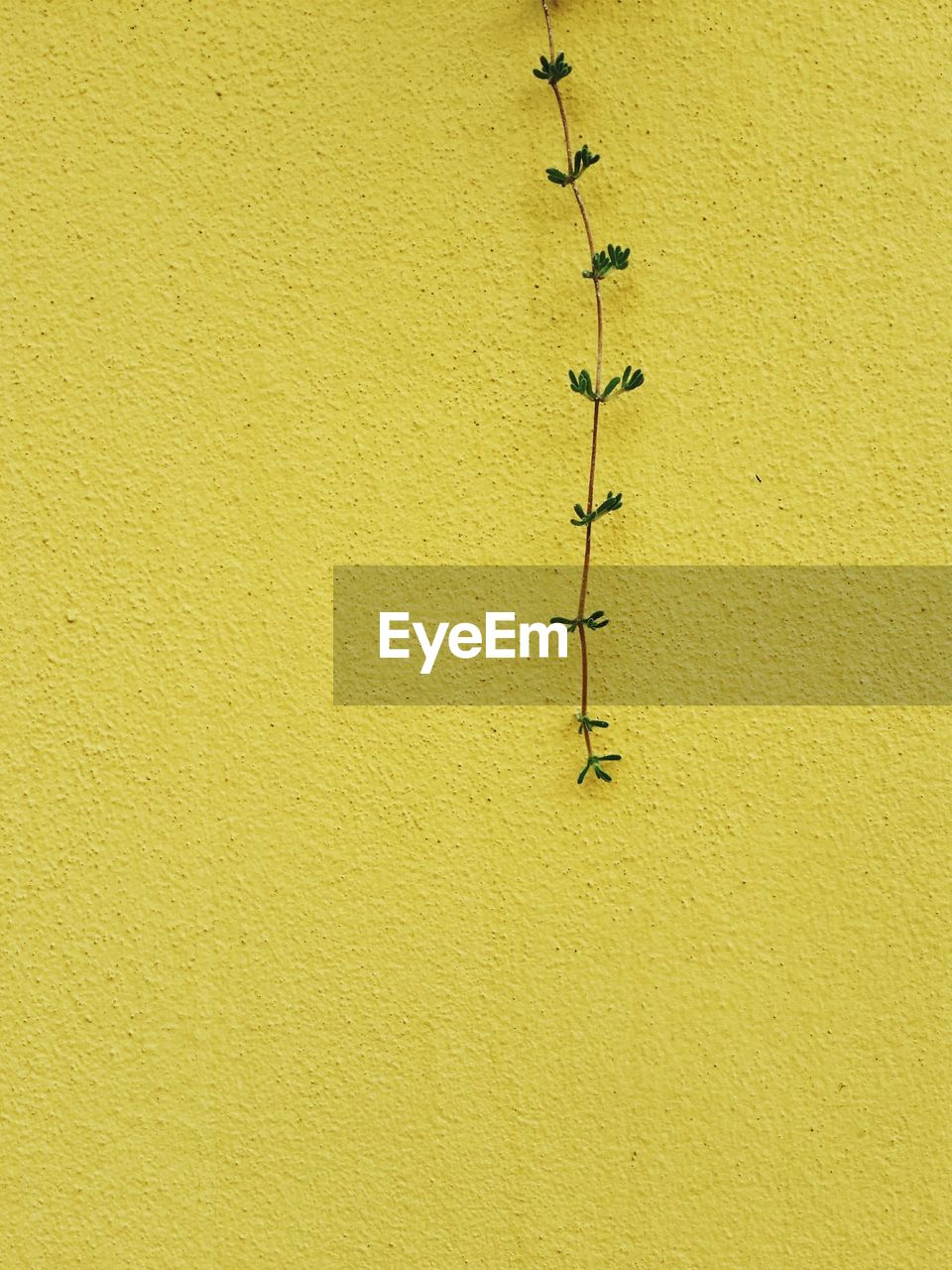 yellow, wall - building feature, architecture, built structure, no people, textured, building exterior, number, wall, day, copy space, close-up, outdoors, full frame, green color, paint, communication, metal, painted, hanging, concrete