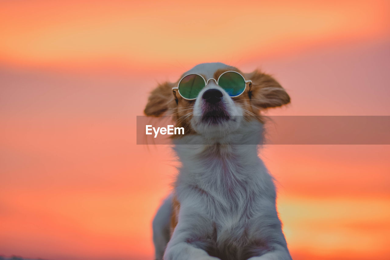 Close-up of dog wearing sunglasses against sky during sunset