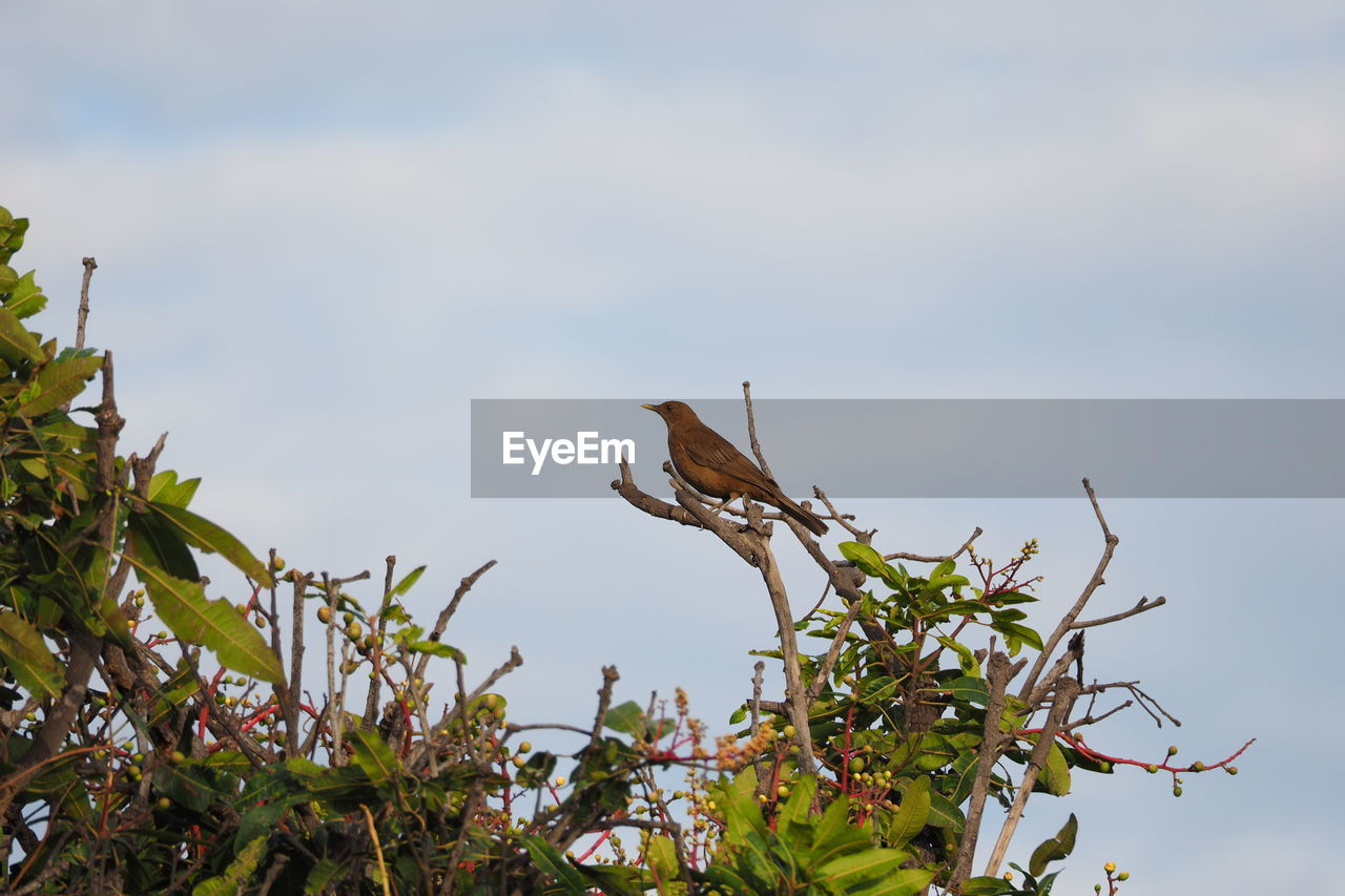 plant, animals in the wild, animal wildlife, animal themes, one animal, animal, growth, bird, sky, nature, vertebrate, plant part, leaf, no people, day, perching, low angle view, tree, focus on foreground, beauty in nature, outdoors