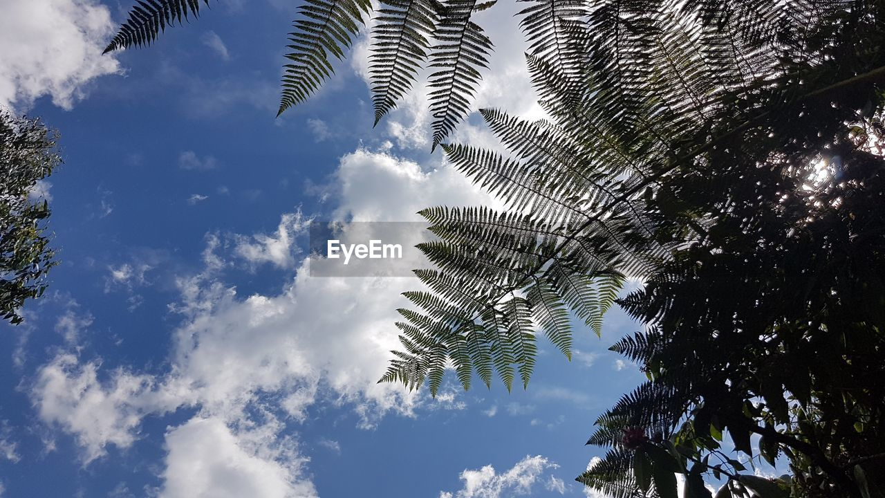 low angle view, tree, sky, plant, cloud - sky, nature, growth, beauty in nature, day, palm tree, no people, tranquility, leaf, tropical climate, outdoors, sunlight, plant part, scenics - nature, green color, tranquil scene, palm leaf, coconut palm tree