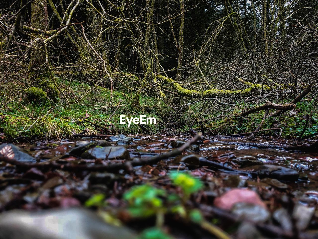 tree, forest, plant, land, tranquility, nature, no people, growth, selective focus, day, beauty in nature, woodland, tree trunk, root, branch, water, trunk, moss, falling, non-urban scene, outdoors, messy, surface level, swamp