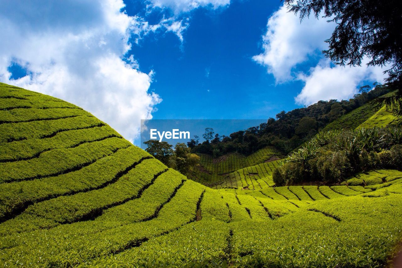 Scenic View Of Terraced Field Against Sky