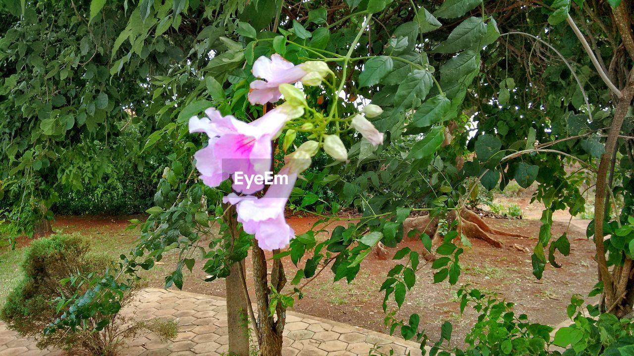 flower, growth, plant, nature, petal, beauty in nature, fragility, leaf, no people, blooming, pink color, flower head, outdoors, freshness, day