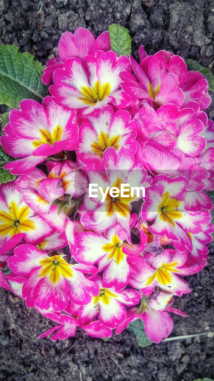 flower, petal, no people, nature, fragility, beauty in nature, outdoors, flower head, growth, day, plant, close-up, freshness