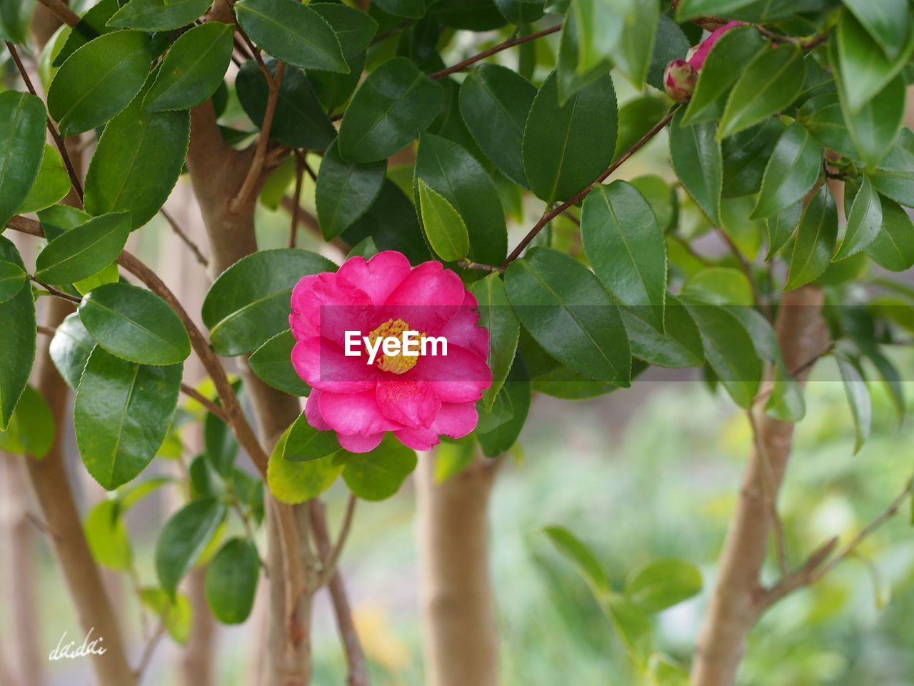 flower, growth, leaf, plant, pink color, petal, green color, nature, fragility, day, beauty in nature, outdoors, blooming, flower head, focus on foreground, freshness, close-up, no people, periwinkle