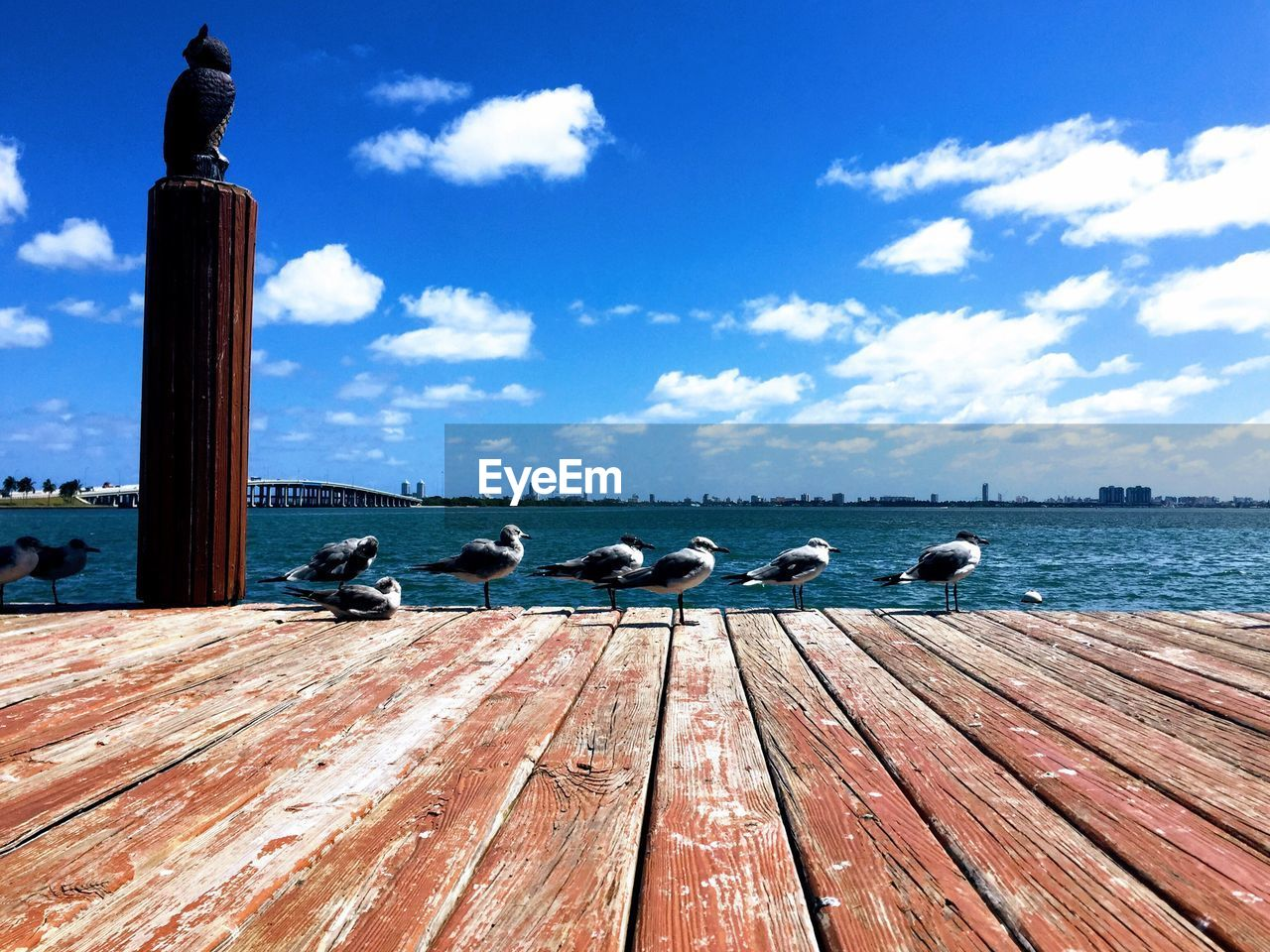 cloud - sky, sky, wood - material, water, group of animals, animal, nature, animal wildlife, animal themes, day, no people, animals in the wild, bird, sea, vertebrate, outdoors, pier, blue, sunlight, seagull, wooden post