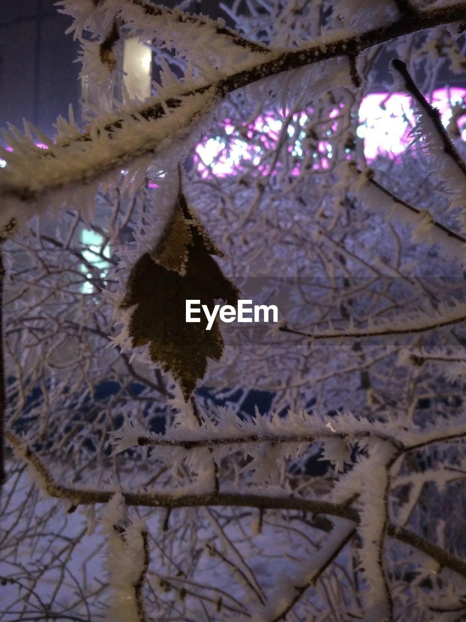 tree, plant, branch, no people, low angle view, winter, decoration, snow, cold temperature, focus on foreground, nature, close-up, hanging, celebration, beauty in nature, day, outdoors, growth, ceiling