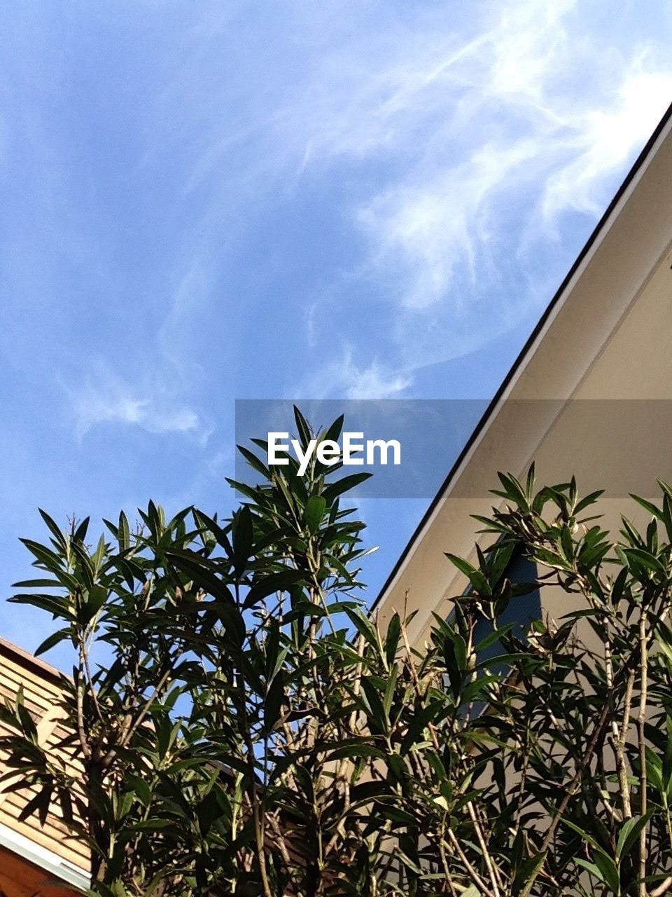 growth, sky, palm tree, low angle view, plant, leaf, day, nature, tree, no people, cloud - sky, built structure, blue, outdoors, architecture, building exterior, beauty in nature