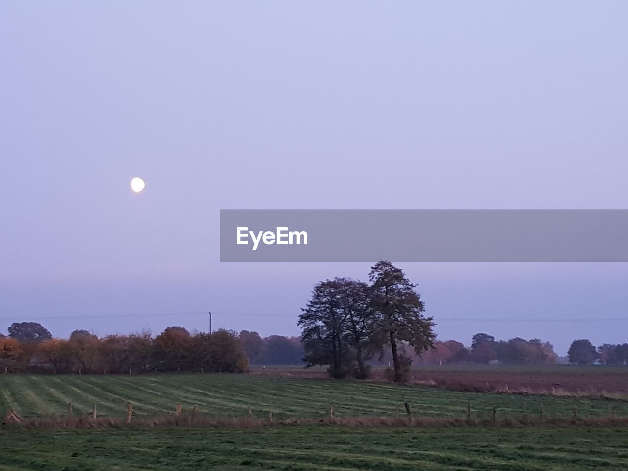 sky, scenics - nature, moon, tranquil scene, beauty in nature, landscape, tranquility, plant, tree, environment, land, field, nature, copy space, no people, growth, rural scene, clear sky, non-urban scene, idyllic, full moon, outdoors