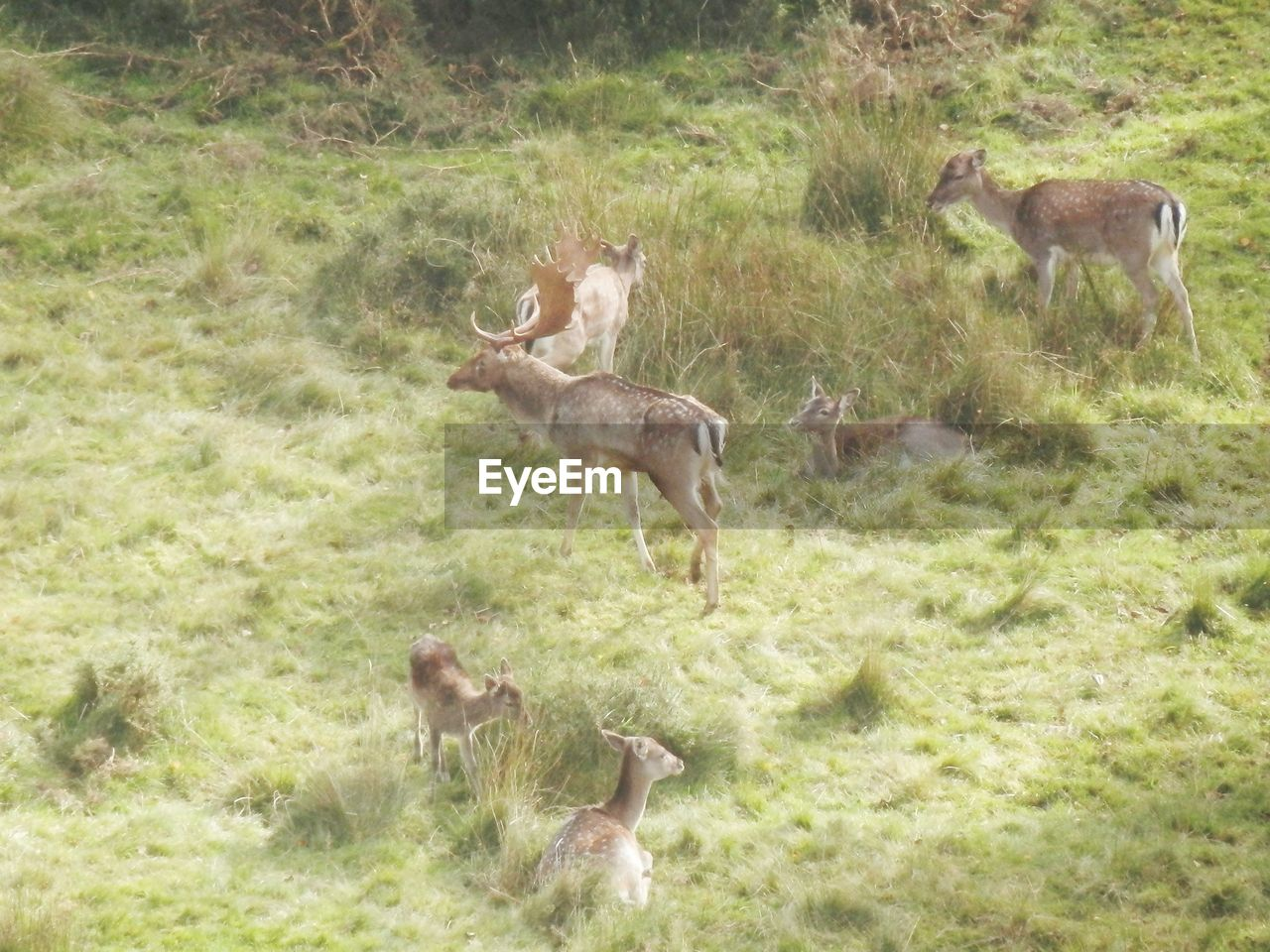 animals in the wild, animal themes, grass, animal wildlife, deer, nature, mammal, day, field, outdoors, young animal, no people, jumping, growth, tree