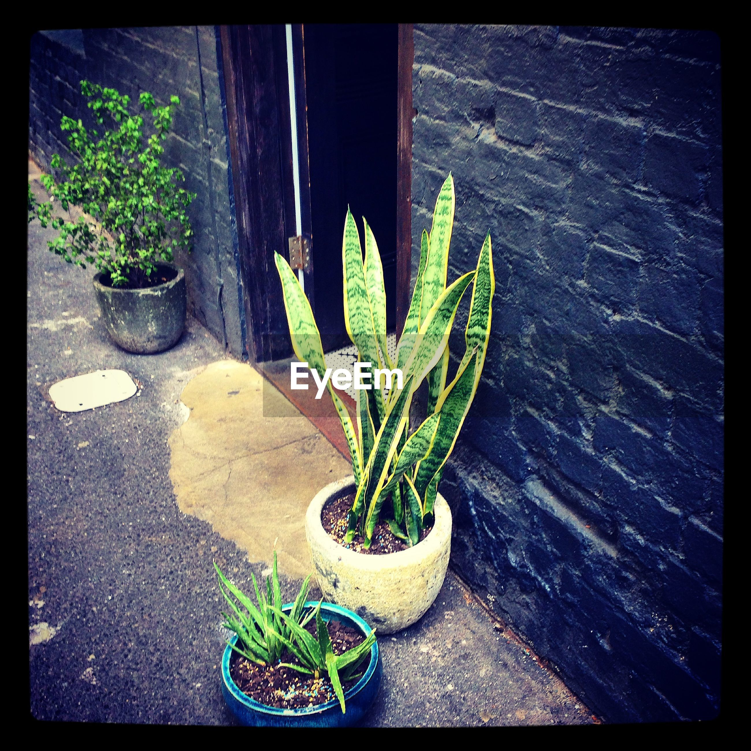 High angle view of potted plants near door