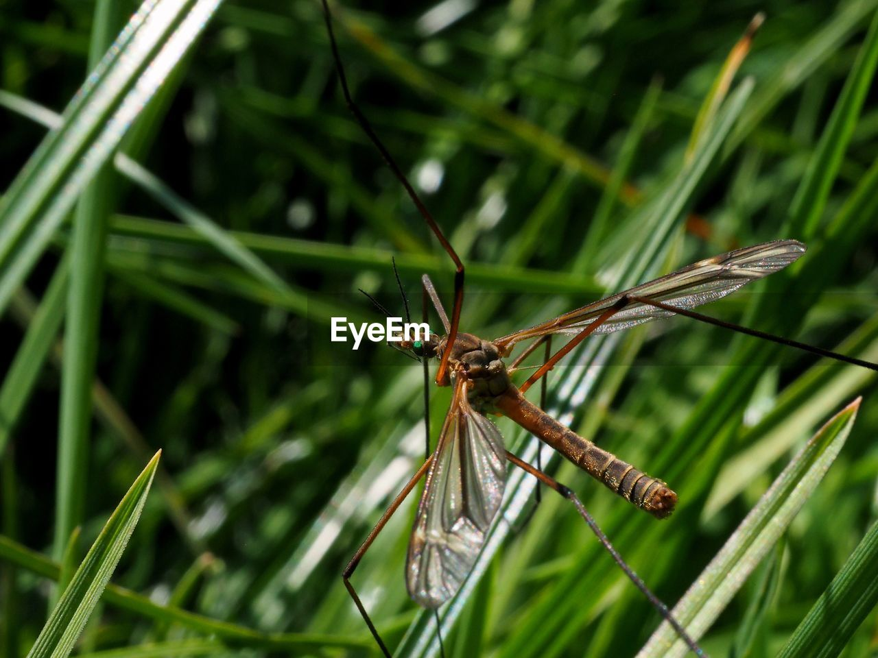 insect, invertebrate, one animal, animal themes, green color, animal, plant, animals in the wild, close-up, focus on foreground, animal wildlife, animal wing, grass, day, nature, no people, dragonfly, growth, leaf, plant part, outdoors, blade of grass