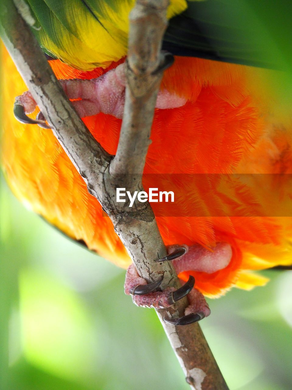 red, tree, no people, animals in the wild, animal themes, close-up, parrot, scarlet macaw, nature, one animal, beauty in nature, animal wildlife, bird, outdoors, day, branch, perching, macaw, rainbow lorikeet