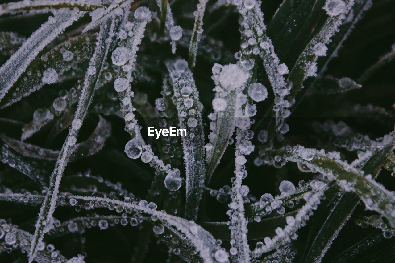 Close-Up Of Frozen Plants