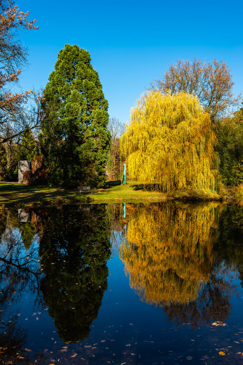 reflection, tree, water, plant, tranquility, lake, beauty in nature, sky, tranquil scene, waterfront, scenics - nature, autumn, growth, nature, clear sky, day, blue, no people, symmetry, change, outdoors