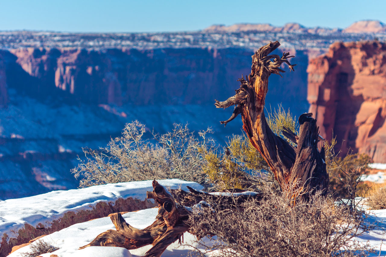 Trees On Snowy Mountain At Dead Horse Point State Park During Sunny Day