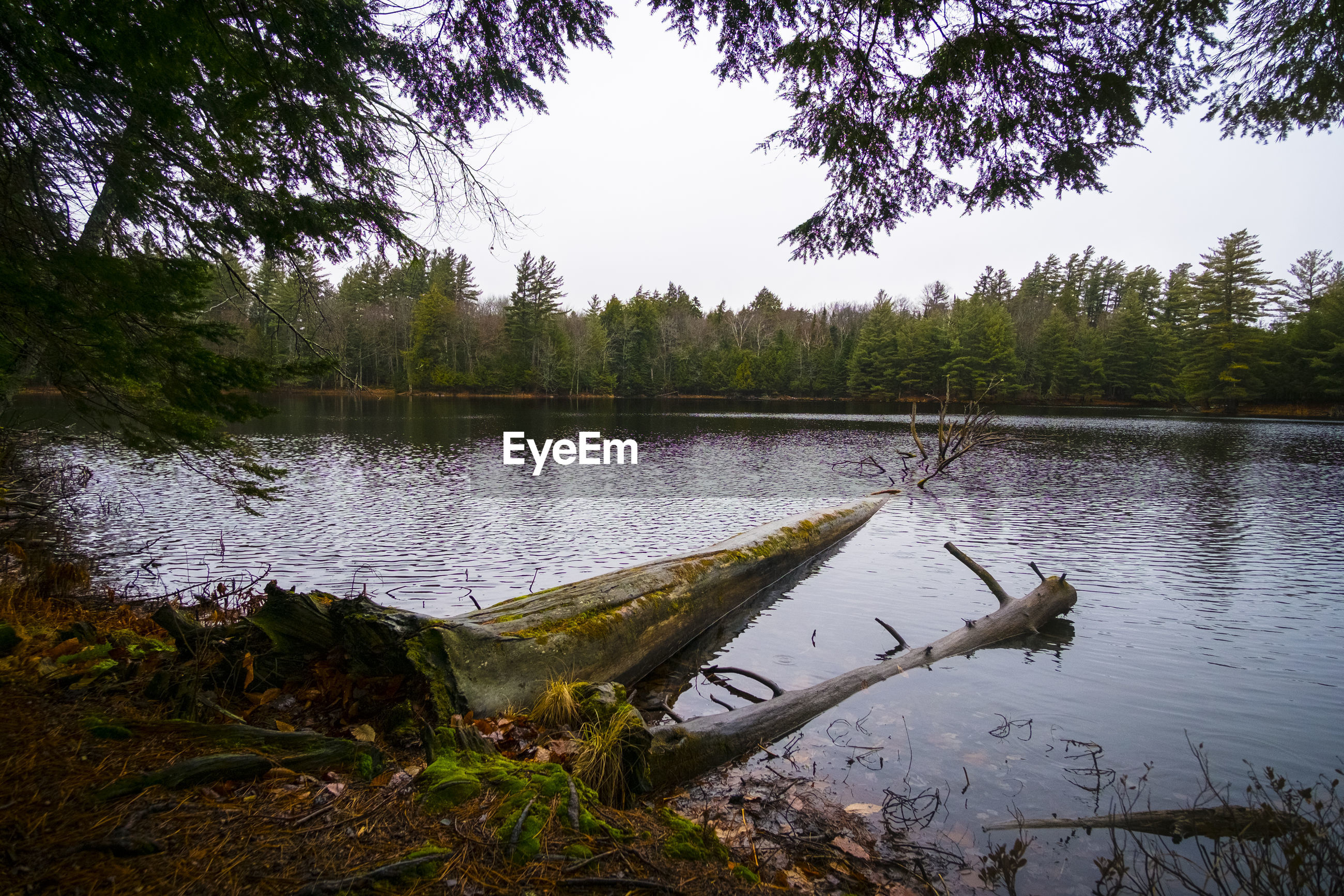 Fallen tree in river at forest against sky