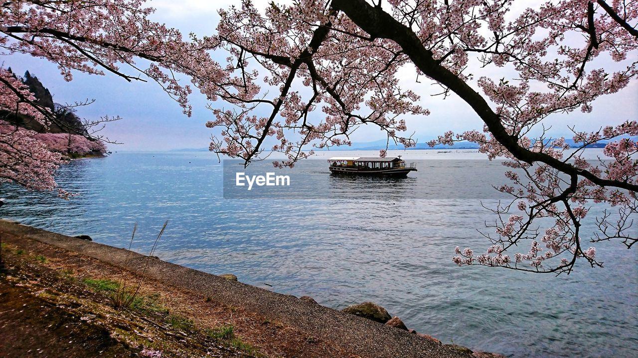 water, tree, nautical vessel, plant, beauty in nature, branch, mode of transportation, transportation, nature, day, tranquility, tranquil scene, travel, sky, scenics - nature, river, growth, outdoors, no people, springtime, cherry blossom, passenger craft, cherry tree