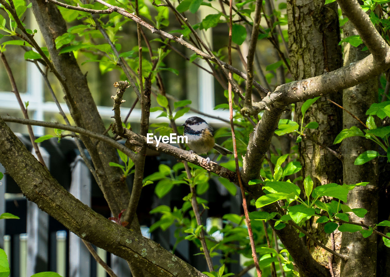 animal themes, animal, one animal, animal wildlife, animals in the wild, vertebrate, tree, plant, branch, bird, perching, nature, mammal, no people, day, focus on foreground, outdoors, plant part, leaf, green color