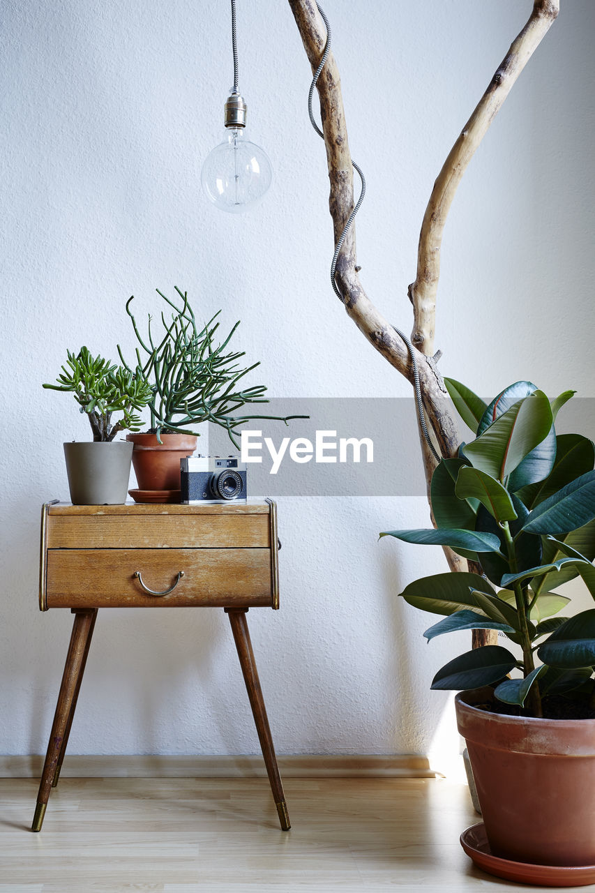 potted plant, indoors, plant, table, leaf, plant part, no people, home interior, nature, seat, wood - material, vase, decoration, growth, wall - building feature, houseplant, chair, hanging, day, white color, flower pot, electric lamp