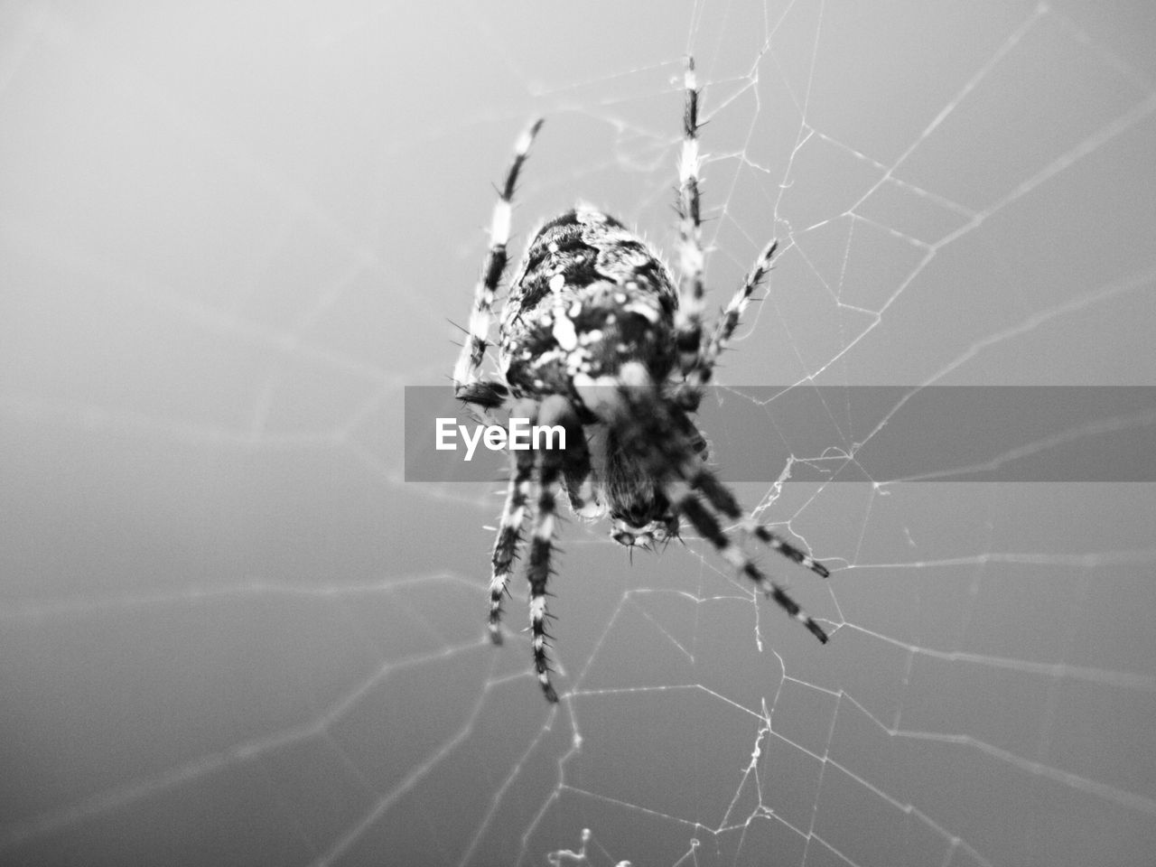 spider web, arachnid, fragility, animal themes, spider, arthropod, animal, invertebrate, close-up, one animal, animals in the wild, animal wildlife, insect, focus on foreground, vulnerability, no people, nature, day, selective focus, survival, outdoors, web, animal leg, complexity