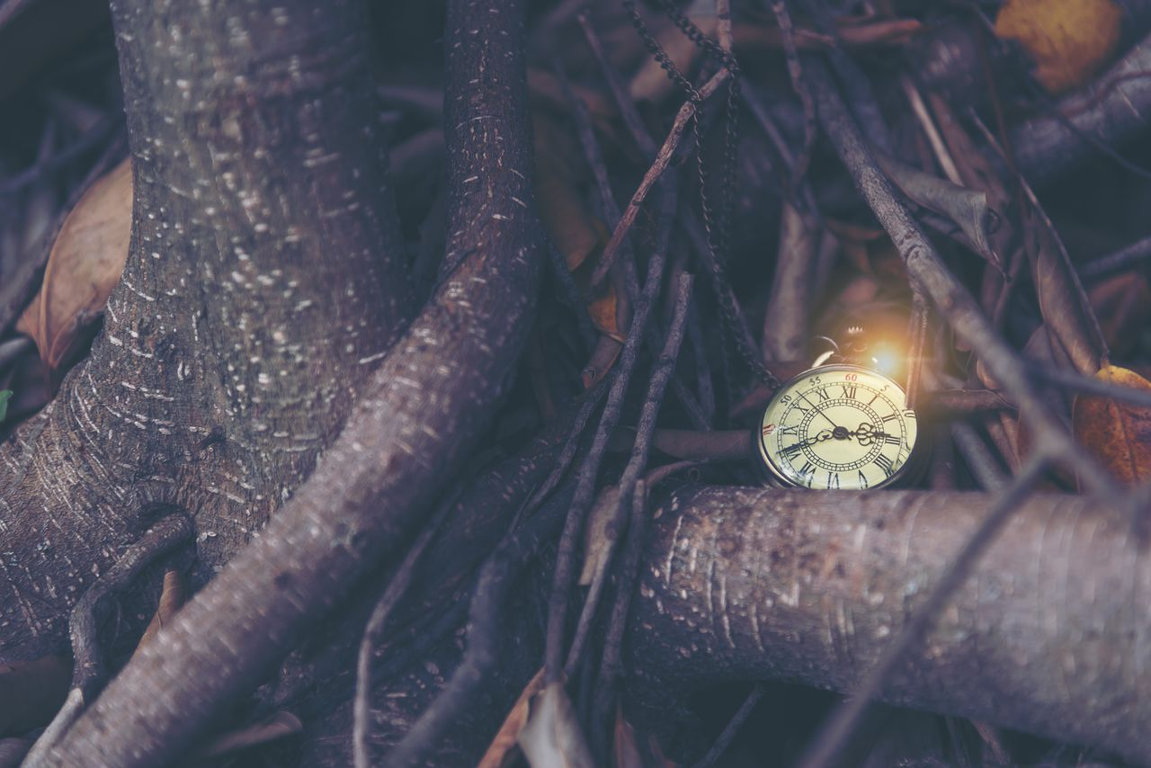 Close-up of pocket watch on tree
