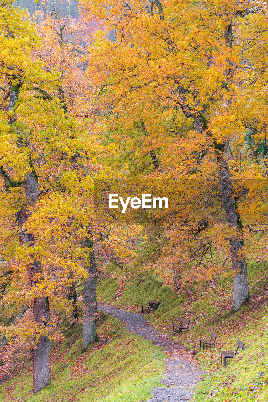 autumn, tree, change, plant, yellow, beauty in nature, scenics - nature, nature, land, plant part, leaf, tranquility, forest, no people, tranquil scene, landscape, orange color, day, idyllic, multi colored, outdoors, autumn collection