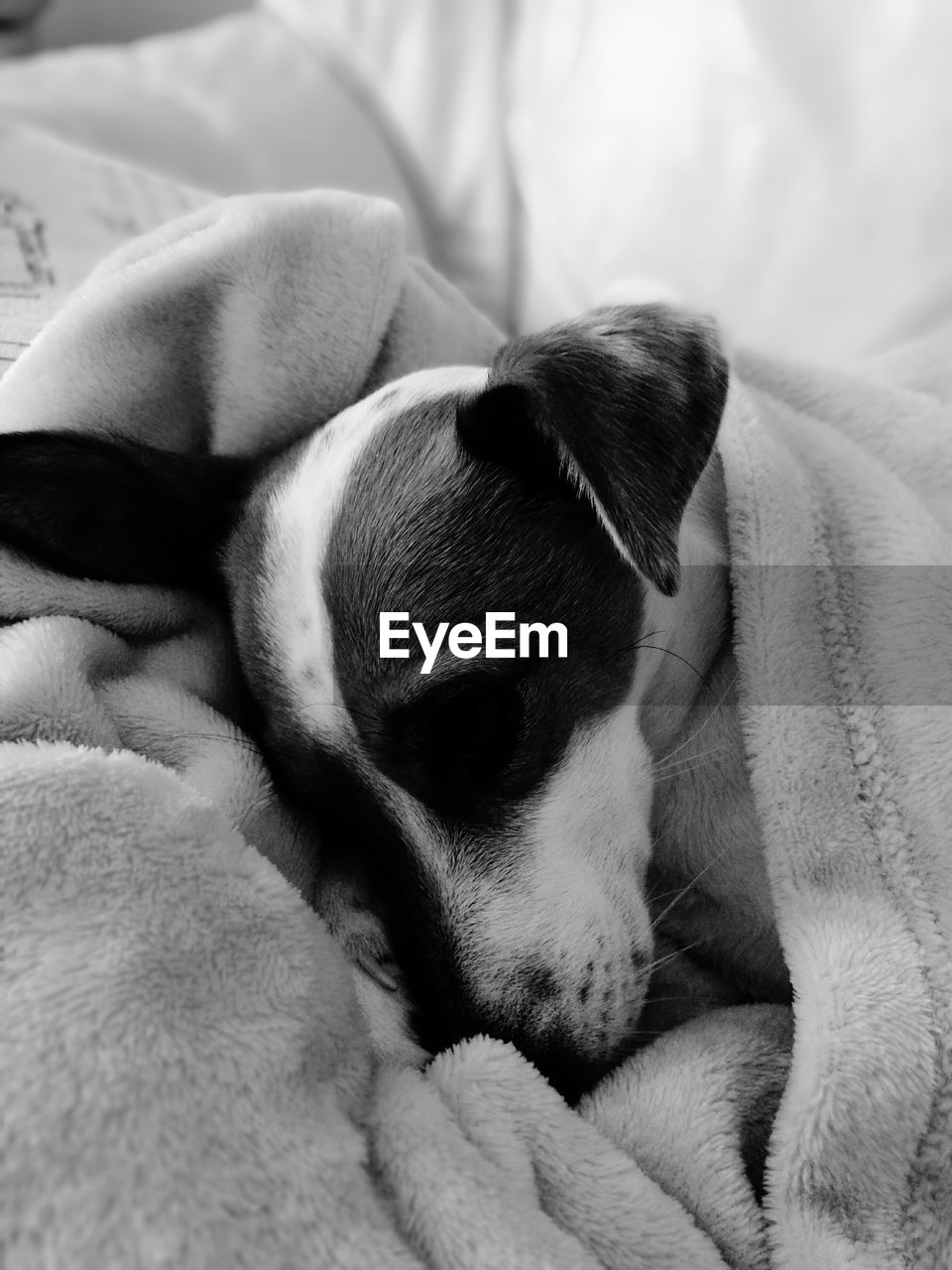 Close-Up Of Puppy Sleeping On Bed At Home